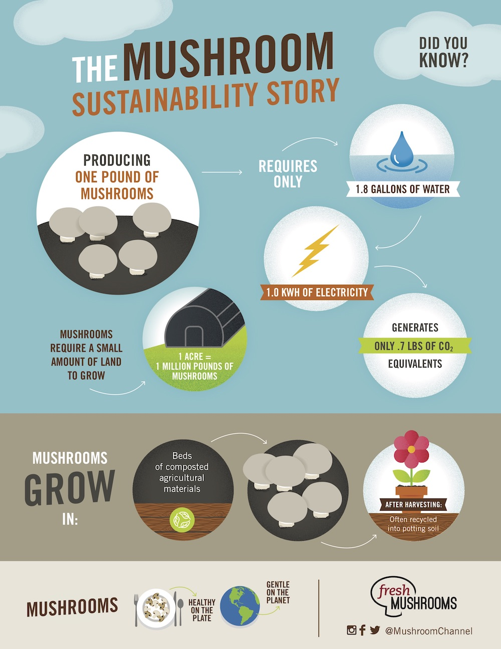 Global news The Mushroom Sustainability Story Infographic