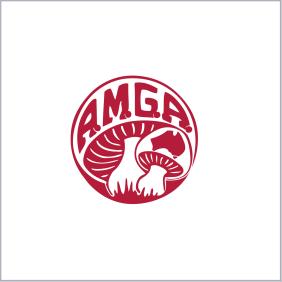 AMGA决赛