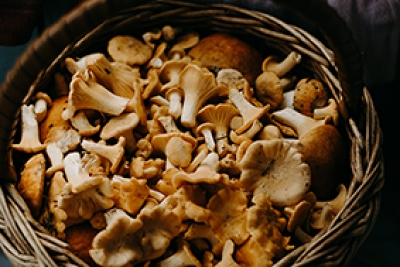 Mushroom Market Get Facts About Business Strategies and Financial Status by 2024