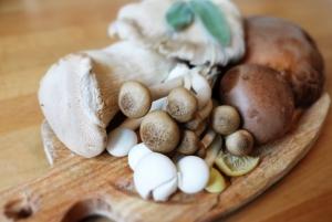 帮助我们开展积极的蘑菇运动!