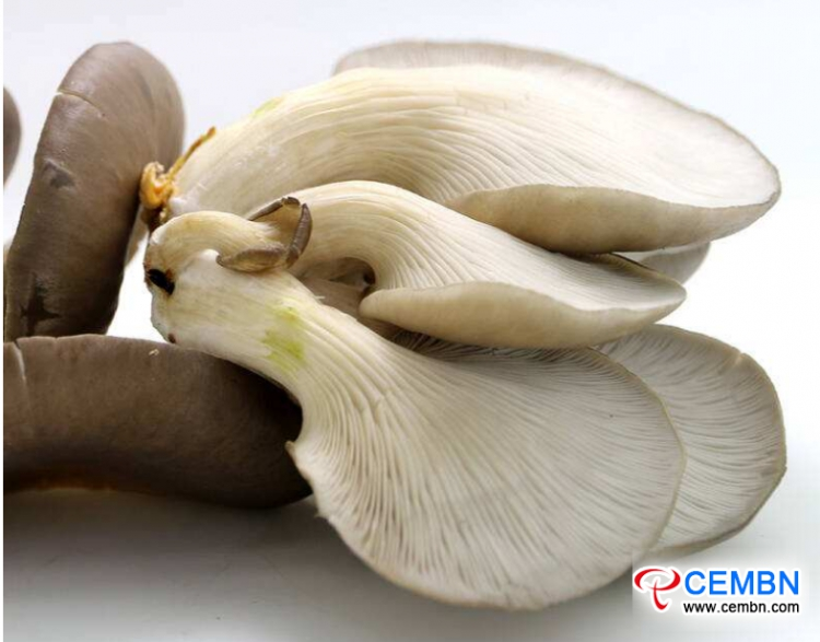 Guangdong Haijixing Market: Analysis of Mushroom Price