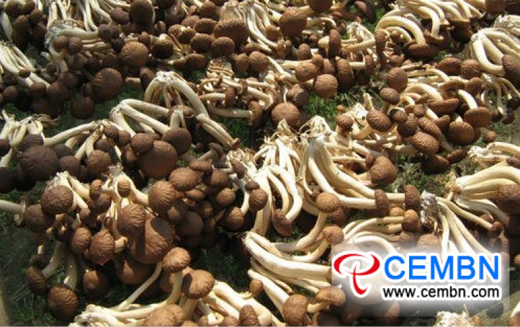 Shaanxi Xinqiao Market: Analysis of Mushroom Price