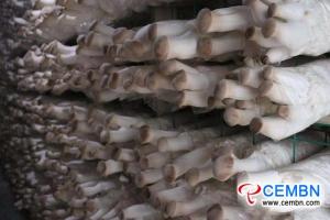 مقاطعة يونان: يتم تأسيس نمط اقتصادي جديد في صناعة الفطر