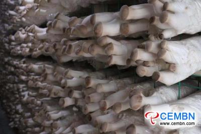 云南省:蘑菇产业建立了新的经济格局