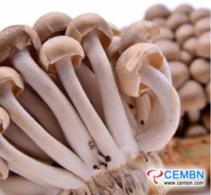 Shanghai Jiangqiao-markt: analyse van de prijs van paddenstoelen