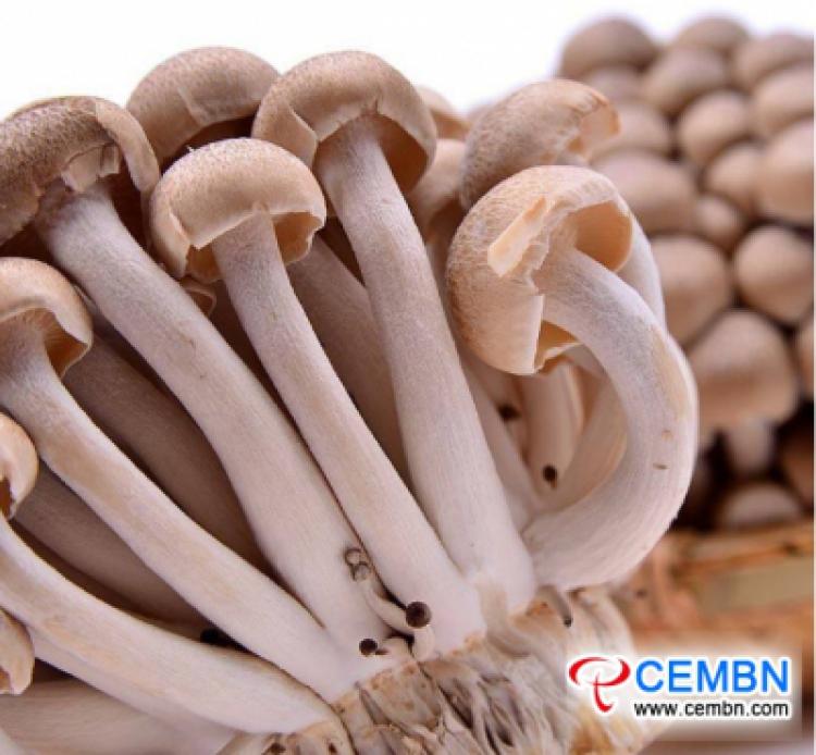 Rynek Shanghai Jiangqiao: analiza ceny grzybów