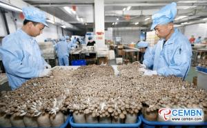 산 동성 : 산업 버섯은 해외 국가에 향기를 보냅니다