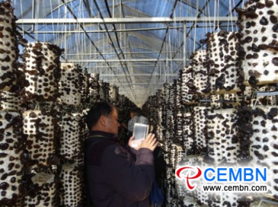 Yunnan Province: Black fungus Culture which owns independent intellectual property rights emerges