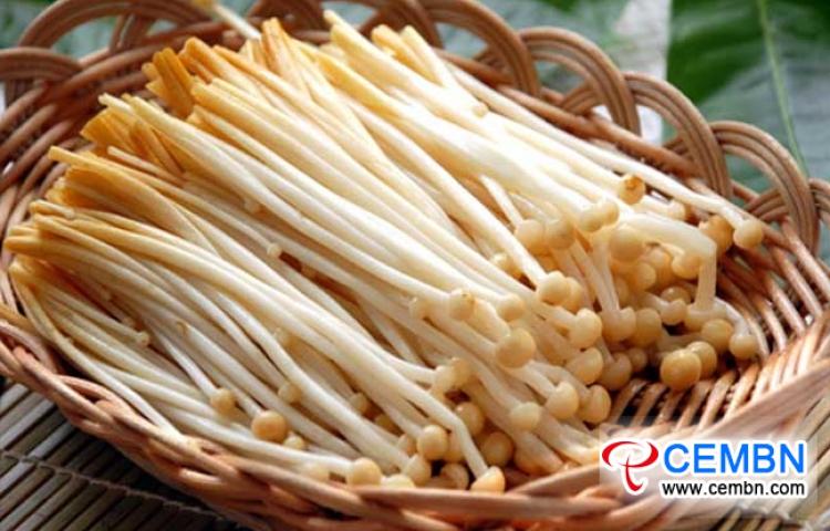中国甘肃省:蘑菇价格市场分析