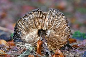 Der Pilz spricht