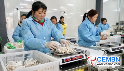 Seafood mushroom production reveals evident economic benefits