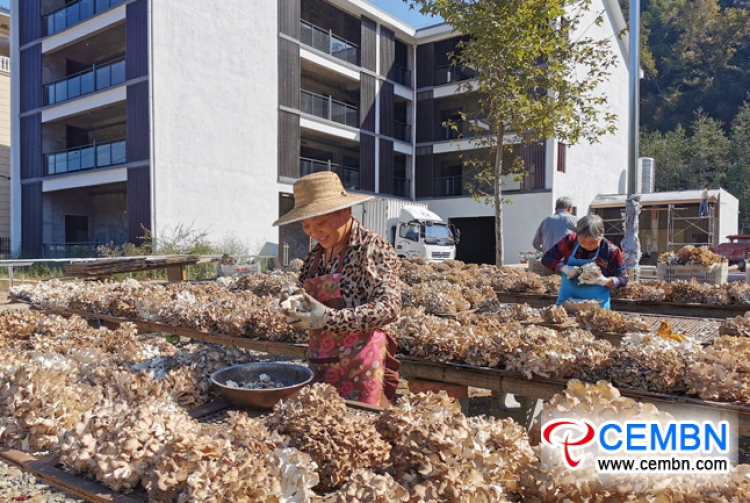 Fruiting season of Grifola frondosa lightens the road of prosperity