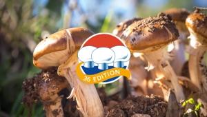 Le Giornate dei funghi olandesi nella primavera del 2022