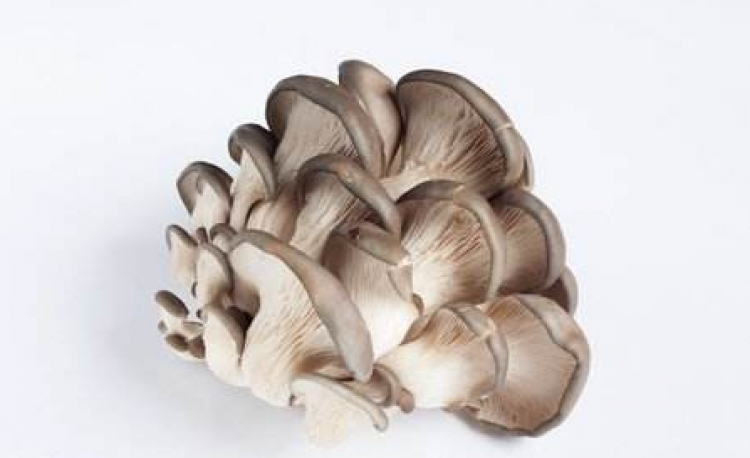 Shanxi Hexi Market: Analysis of Mushroom Price