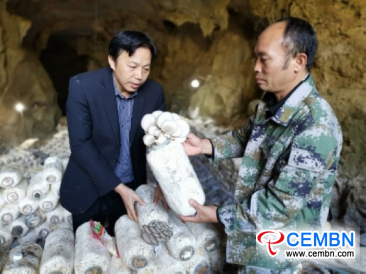Palitos de hongos 5000 cultivados experimentalmente en el auge de la cueva kárstica