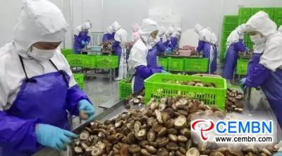 中国的地平线:2018上半年出口干蘑菇的增长或下降?