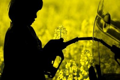 Científicos revelan nueva técnica para producir biocombustible a partir de residuos de hongos