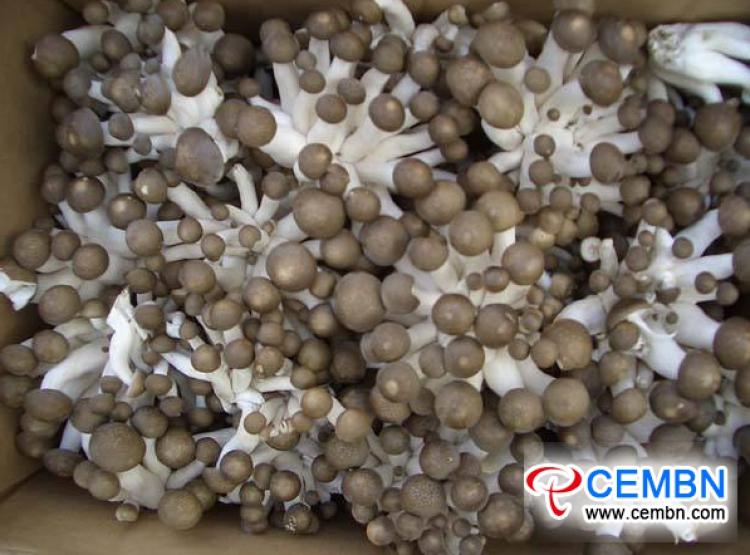 Chợ Vân Nam Guanshang: Phân tích giá nấm