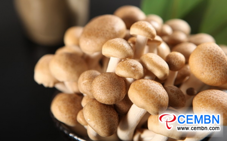 Inner Mongolia Dongwayao Market: Analysis of Mushroom Price