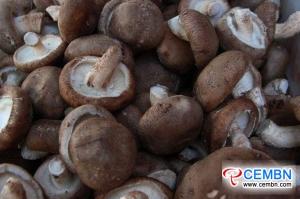 Shandong Jining Market: Analysis of Mushroom Price