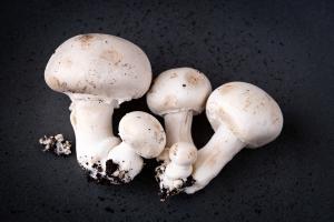 'Als champignonsector om onze eigen problemen op te lossen'