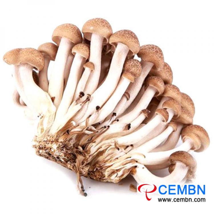 Marché de Guangdong Jiangnan: analyse du prix des champignons