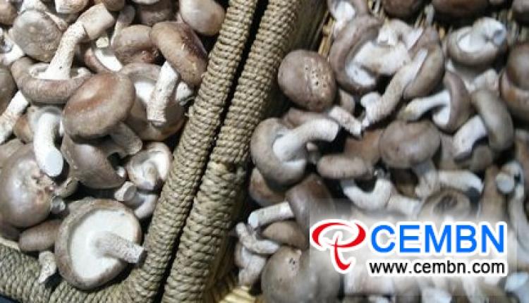 랴오닝 단동 시장 : 버섯 가격 분석