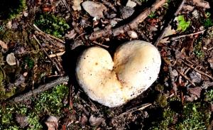 Mushrooming' 면역을 위한 버섯의 미래: 사람과 지구