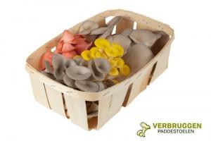Sauver les champignons aux Pays-Bas