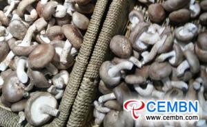 مركز Anhui Fuyang اللوجستي للمنتجات الزراعية: تحليل سعر الفطر