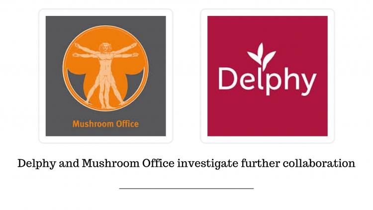 Delphy и Mushroom Office расследуют дальнейшее сотрудничество