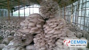 Anhui Zhougudui Market:キノコ価格の分析