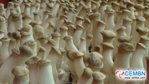 산서 Hexi 시장 : 버섯 가격의 분석
