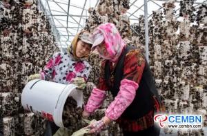 Rosnący czarny grzyb oznacza dobrze prosperujący przemysł