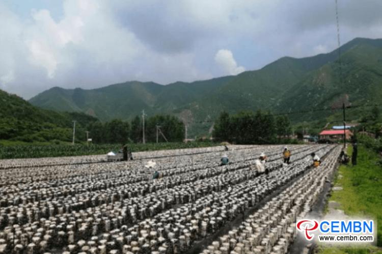 목재 귀 재배는 번영하는 산업을 의미합니다