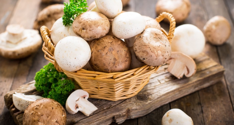 JM Farms gibt neue Partnerschaft mit Giorgi Mushroom Co. und Grupo Monteblanco Mb, SA De CV bekannt