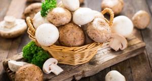 JM Farms annuncia una nuova affiliazione con Giorgi Mushroom Co. e Grupo Monteblanco Mb, SA De CV