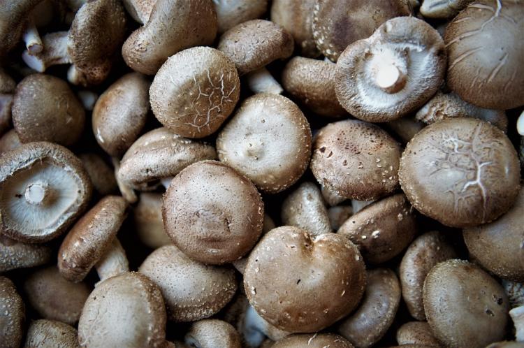 Rynek Shenyang Shengfa: analiza ceny grzybów