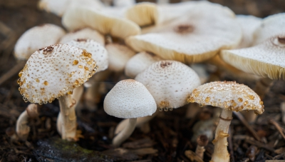 10 Facts about mushrooms that are bound to grow on you