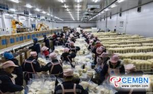 Mercato di Shandong Huangshan: analisi del prezzo dei funghi