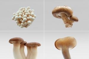 Mushroom burial suit
