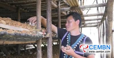 De champignonteelt in Brazilië impliceert mooie inkomsten