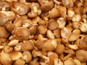 Wetenschappers helpen Sikkim-boeren bij het kweken van champignonsoort 'Rs 3,000 / kg' met verbeterde vitamine D.