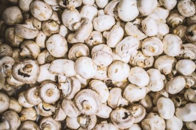 蘑菇如何限制替代蛋白质市场