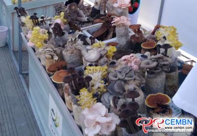 Verschiedene Pilze ziehen die Augäpfel von Ausländern an
